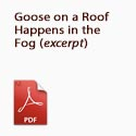 Goose on a Roof Happens in the Fog