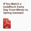 If You Watch a Goldfinch Every Day from Winter to Spring