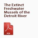 The Extinct Freshwater Mussels of the Detroit River
